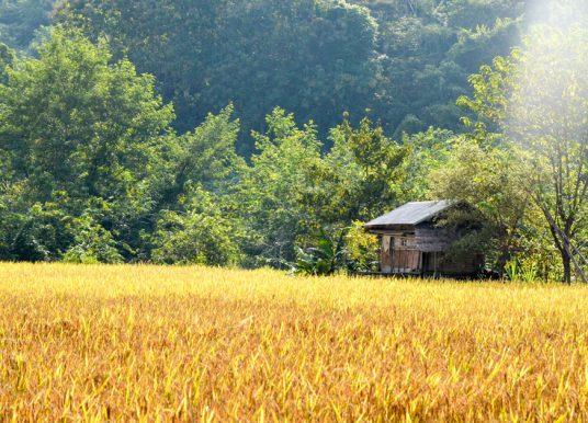 5 choses à faire au Laos