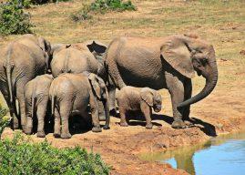 Des vacances en Afrique du Sud pour des moments inoubliables