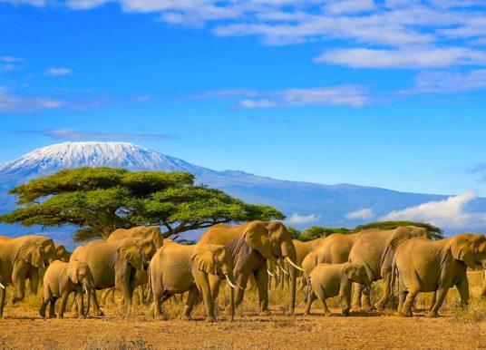 Que faire au Kenya ?